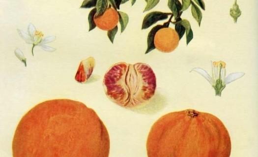 orange_pic