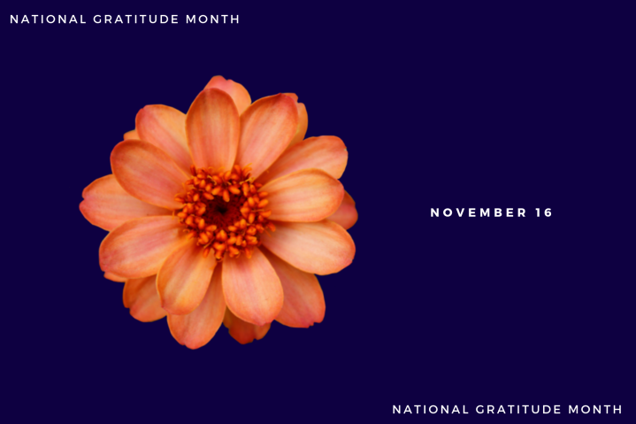 Gratitude – Day16