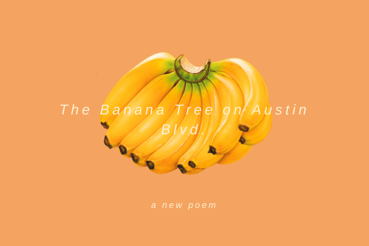 The Banana Tree on Austin Blvd.